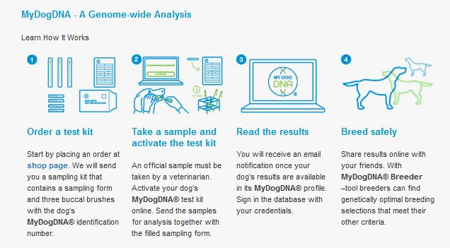 Mitä MyDogDNA kertoo omasta koirastani?